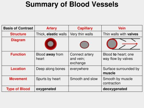 small resolution of summary of blood vessels