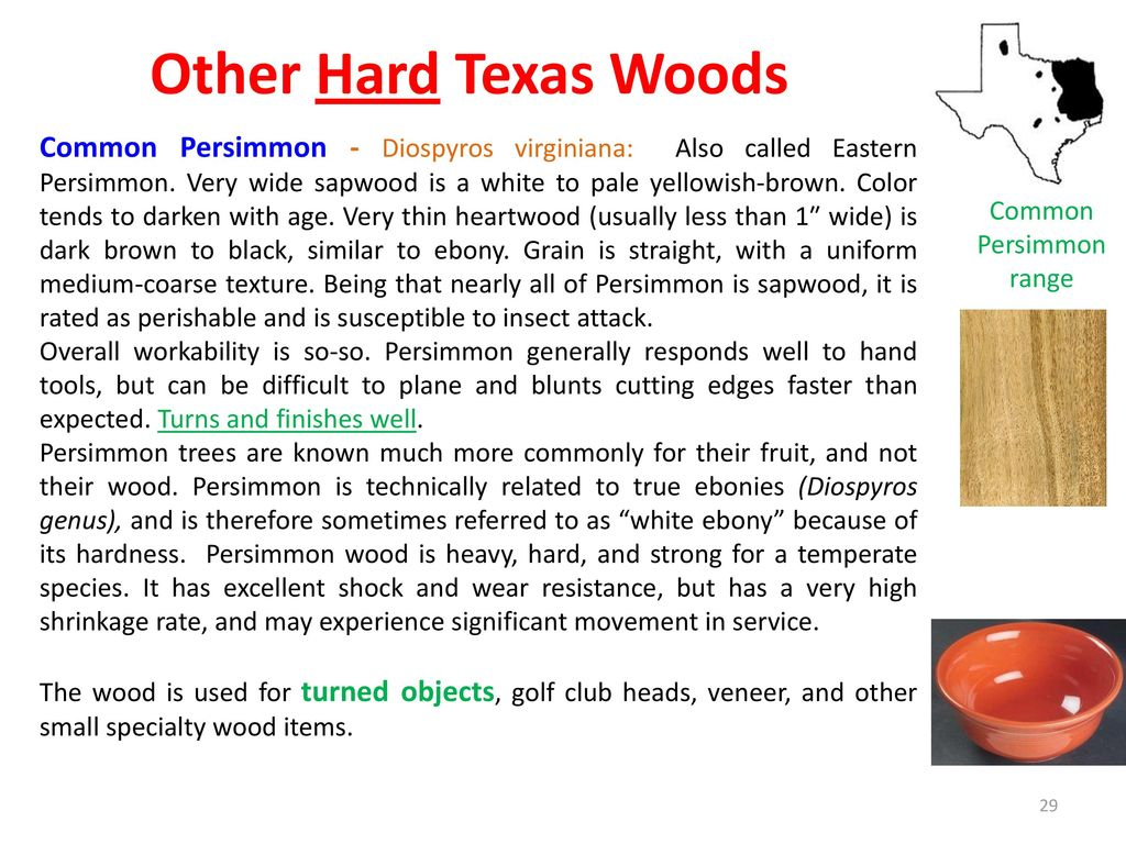 Yellowish Wood Called