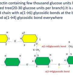 containing few thousand glucose units looks like a branched tree 20 30 glucose units per branch it is a branched chain with 1 6 glycosidic bonds at  [ 1024 x 768 Pixel ]