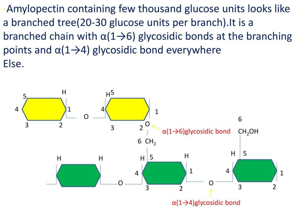 medium resolution of  containing few thousand glucose units looks like a branched tree 20 30 glucose units per branch it is a branched chain with 1 6 glycosidic bonds at
