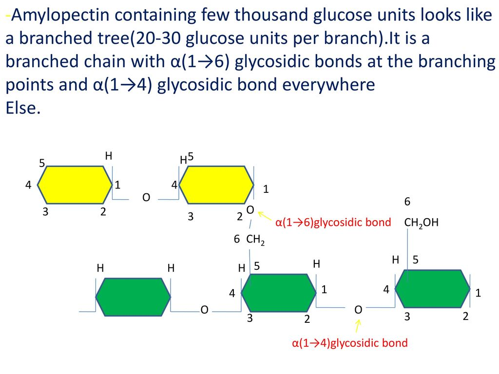 hight resolution of  containing few thousand glucose units looks like a branched tree 20 30 glucose units per branch it is a branched chain with 1 6 glycosidic bonds at