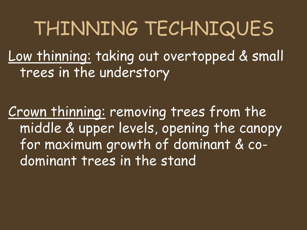 Silviculture the application of various treatments such as; Silvicultural Practices Ppt Download
