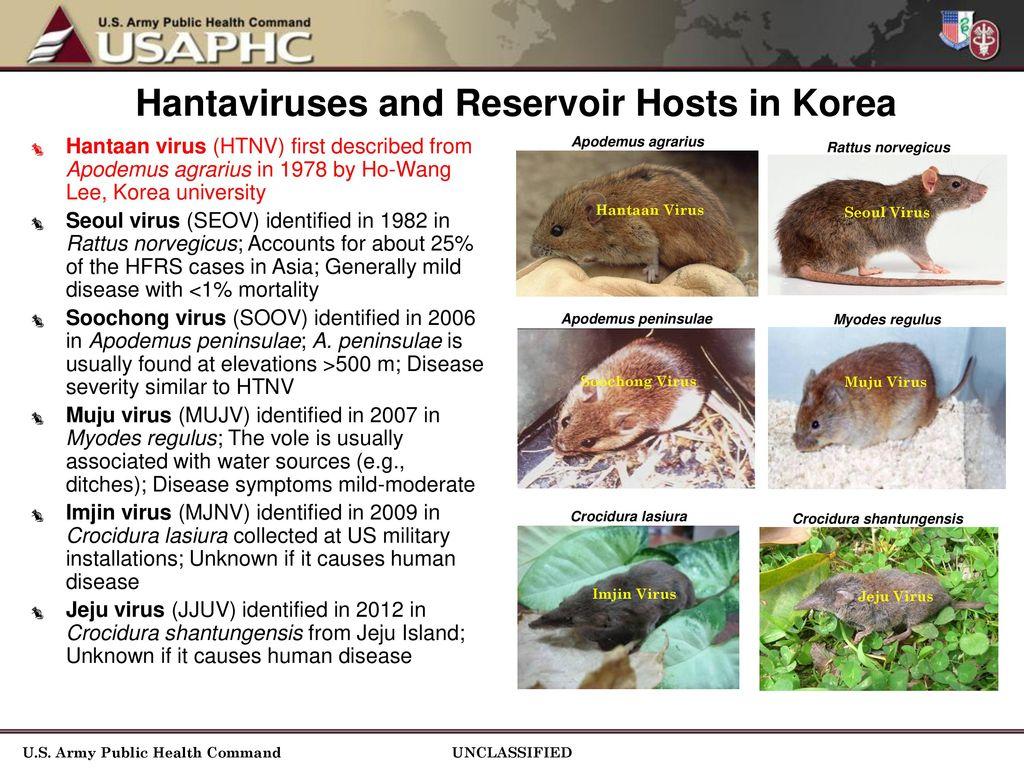 Hantavirus Surveillance and Epidemiology of Hantaan Virus in ...