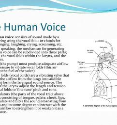 the human voice [ 1024 x 768 Pixel ]