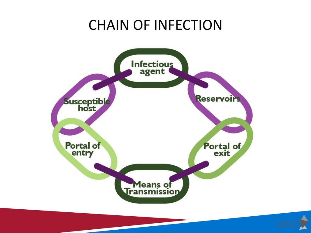 hight resolution of chain of infection