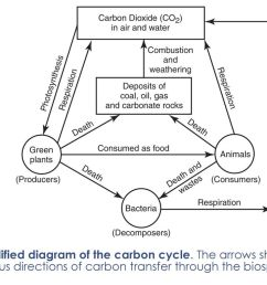simplified diagram of the carbon cycle [ 1024 x 768 Pixel ]