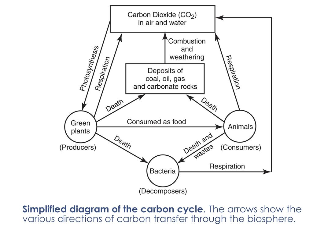 hight resolution of simplified diagram of the carbon cycle