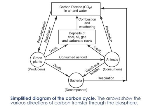 small resolution of simplified diagram of the carbon cycle