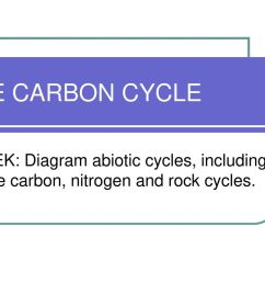 1 the carbon cycle tek diagram abiotic cycles including the carbon nitrogen and rock cycles  [ 1024 x 768 Pixel ]