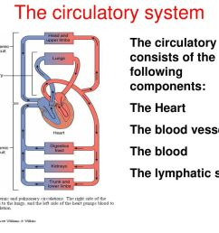 5 the circulatory system [ 1024 x 768 Pixel ]