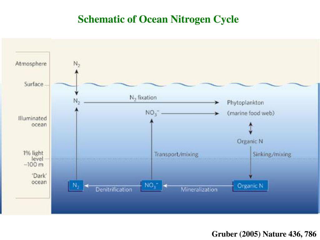 hight resolution of schematic of ocean nitrogen cycle