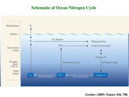 small resolution of schematic of ocean nitrogen cycle