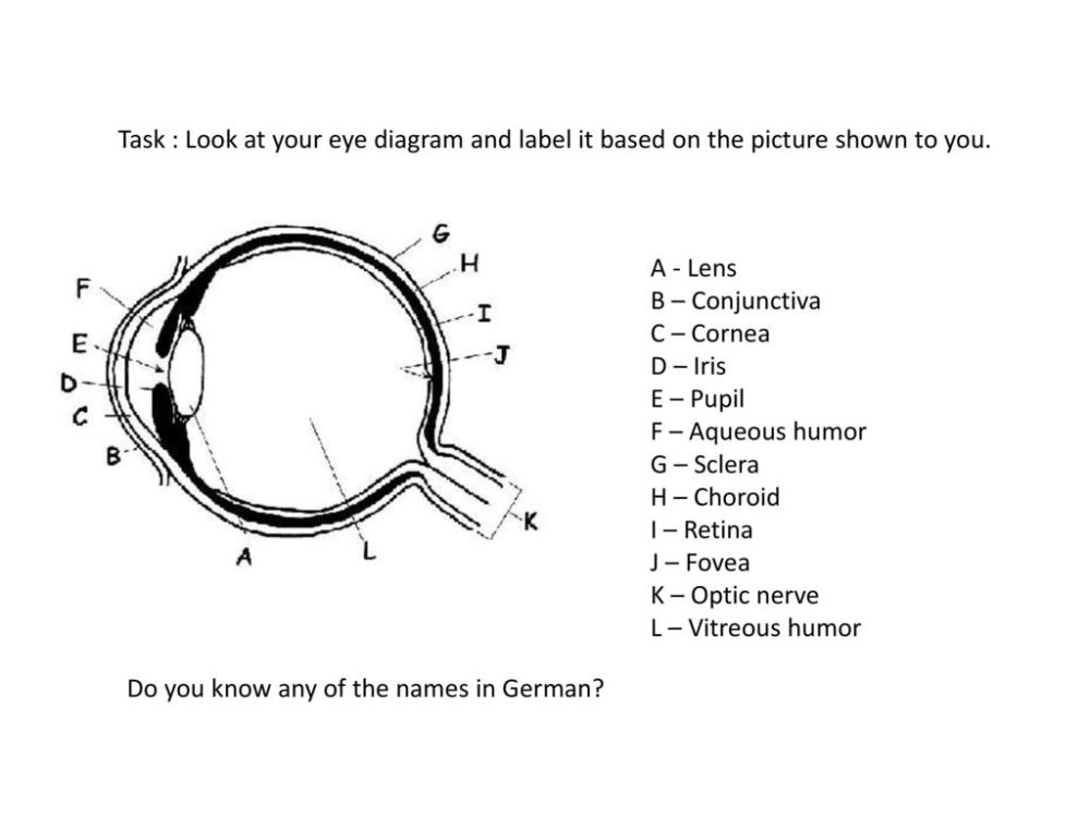 medium resolution of task look at your eye diagram and label it based on the picture shown to