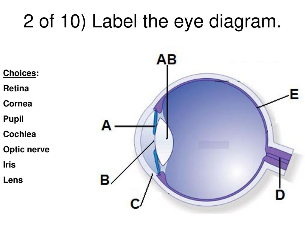 hight resolution of 26 2 of 10 label the eye diagram