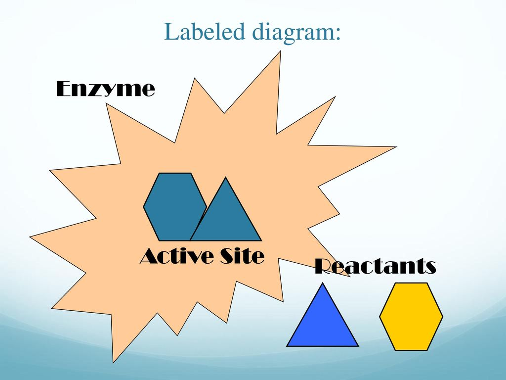 hight resolution of 39 labeled diagram enzyme active site reactants