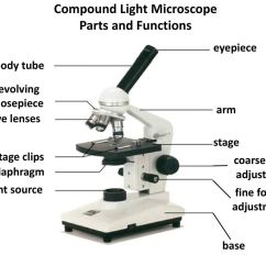 Diagram Of A Microscope And Functions Its Parts 2006 Gmc Sierra Bose Audio Wiring The Ppt Download