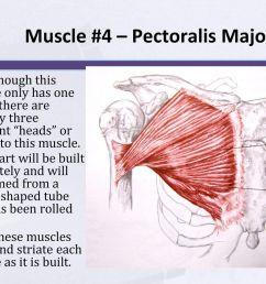 14 muscle  [ 1024 x 768 Pixel ]