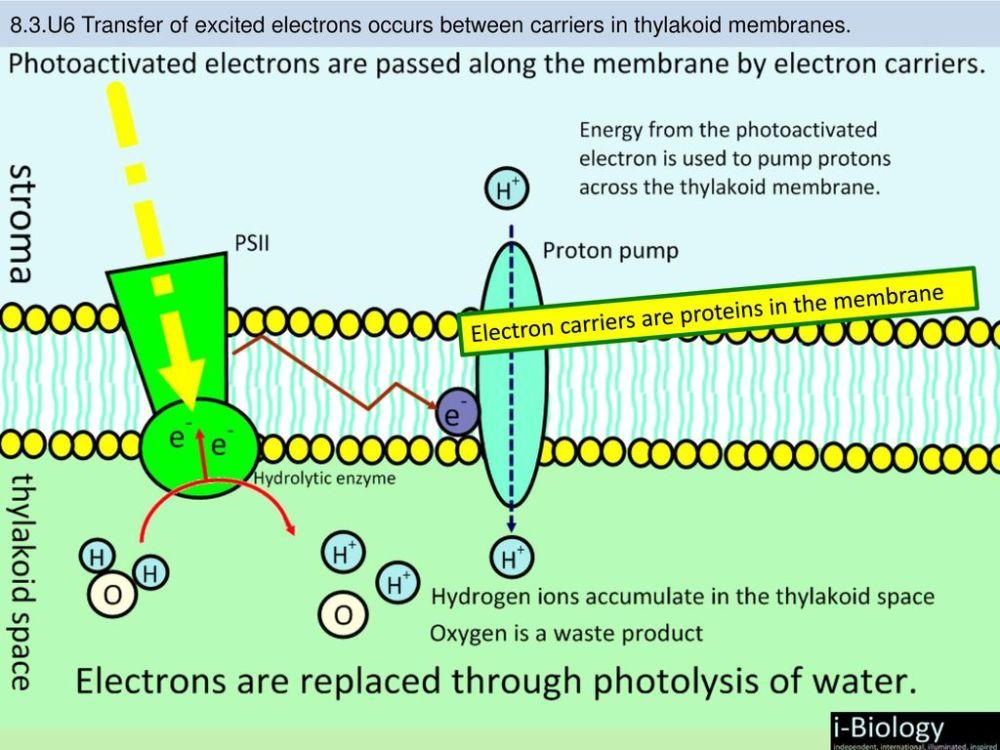 medium resolution of 12 electron