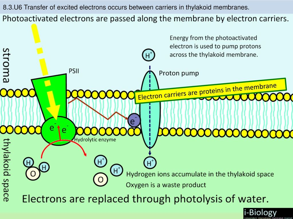 hight resolution of 12 electron