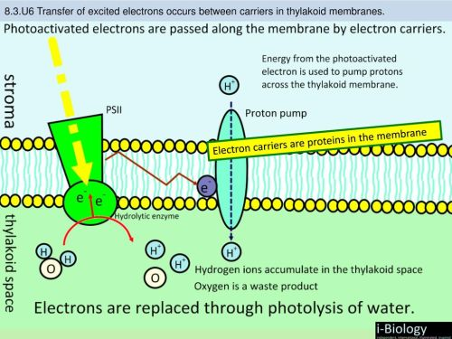 small resolution of 12 electron