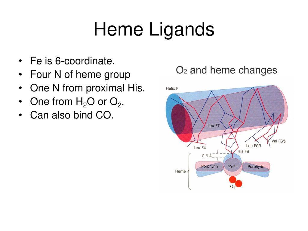 hight resolution of 5 heme