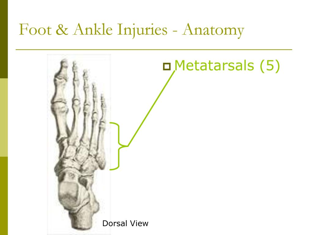 hight resolution of foot ankle injuries anatomy
