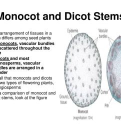 monocot and dicot stems [ 1024 x 768 Pixel ]