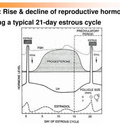 59 cow rise decline of reproductive hormones during a typical 21 day estrous cycle [ 1024 x 768 Pixel ]
