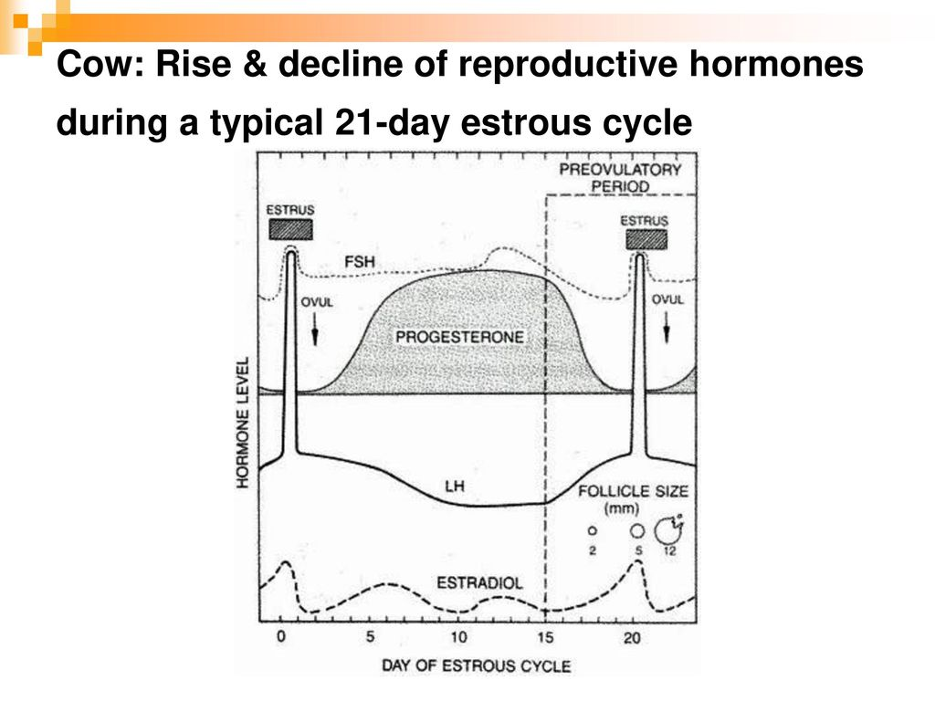 hight resolution of 59 cow rise decline of reproductive hormones during a typical 21 day estrous cycle