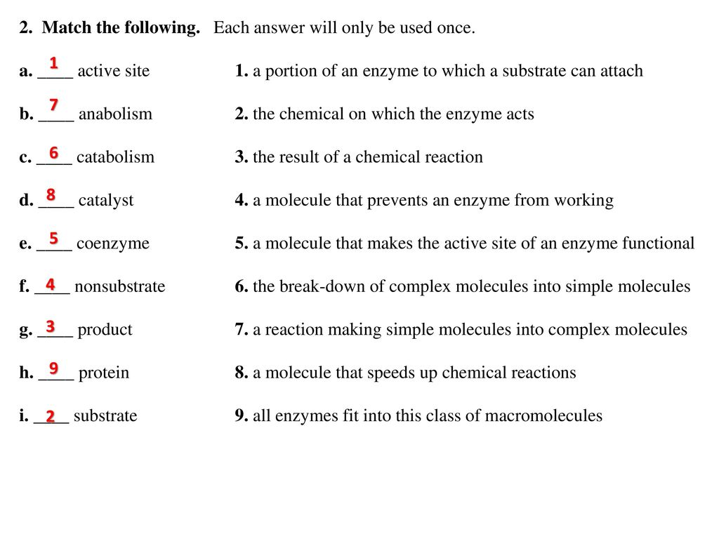 Chemical Reactions And Enzymes Worksheet Answers