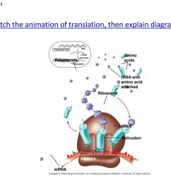watch the animation of translation then explain diagram  [ 1024 x 768 Pixel ]