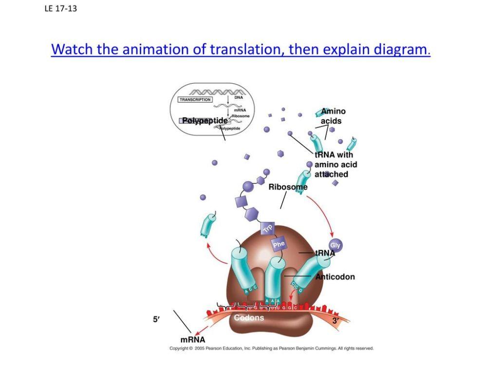 medium resolution of watch the animation of translation then explain diagram
