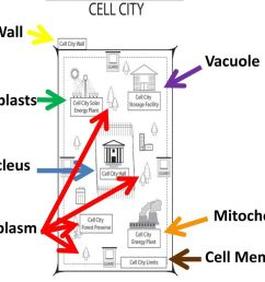 Plant Cell vs. Animal Cell - ppt download [ 768 x 1024 Pixel ]