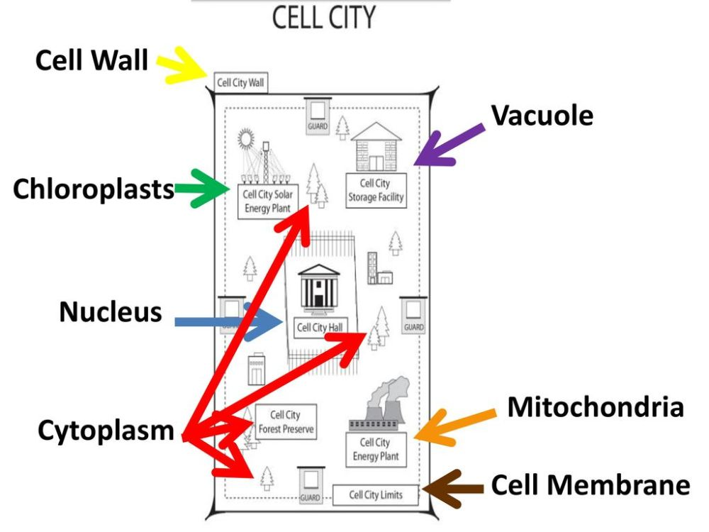 medium resolution of Plant Cell vs. Animal Cell - ppt download