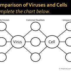 Venn Diagram Comparing Dna And Rna Ferguson T20 Wiring Cell Virus Comparison Chart Jangan Lupa Persenannya
