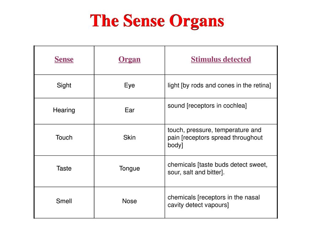 The Sense Organs