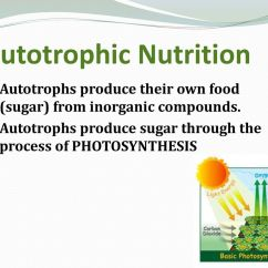 Explain The Process Of Nutrition In Amoeba With Diagram Honeywell Pir Motion Sensor Wiring Autotrophic Ppt Download