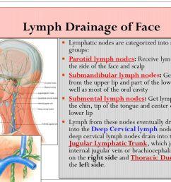 33 lymph drainage of face lymphatic nodes  [ 1024 x 768 Pixel ]