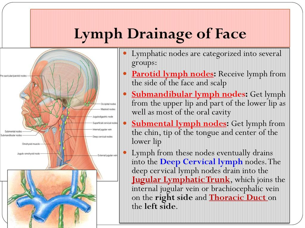 hight resolution of 33 lymph drainage of face lymphatic nodes