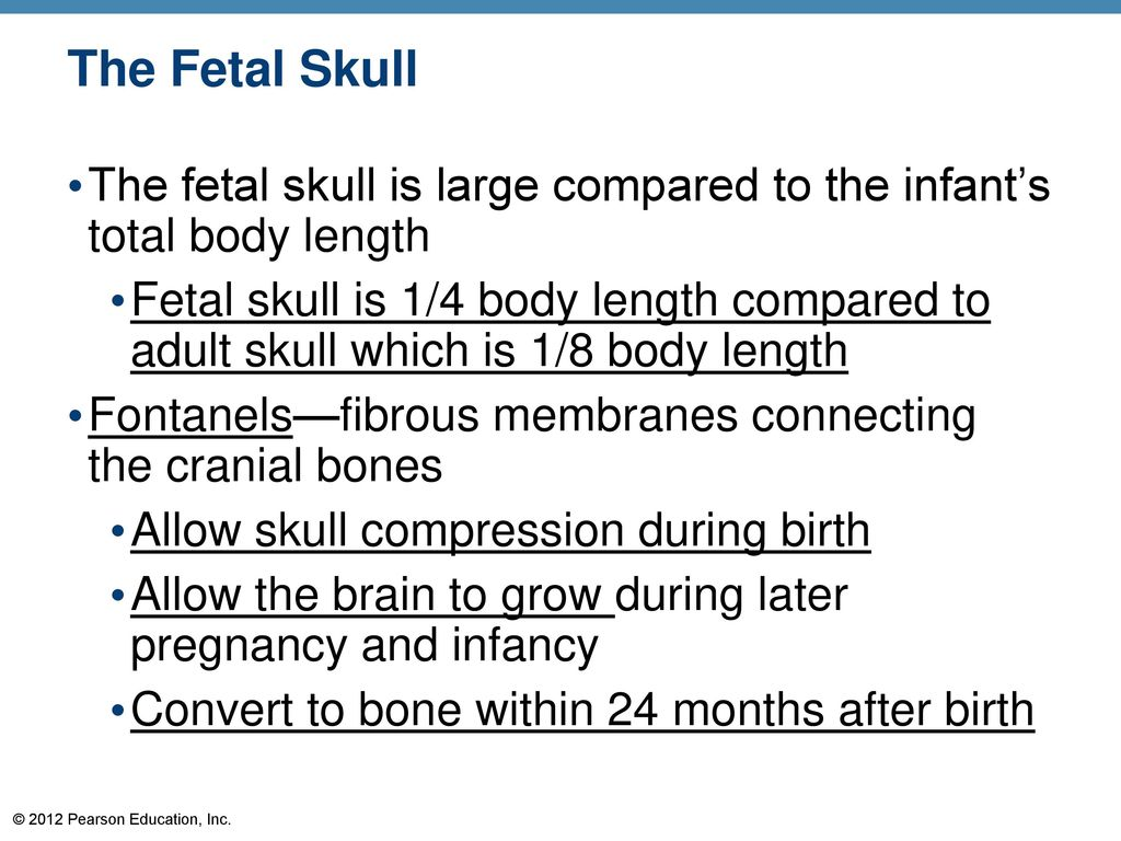hight resolution of the fetal skull the fetal skull is large compared to the infant s total body length