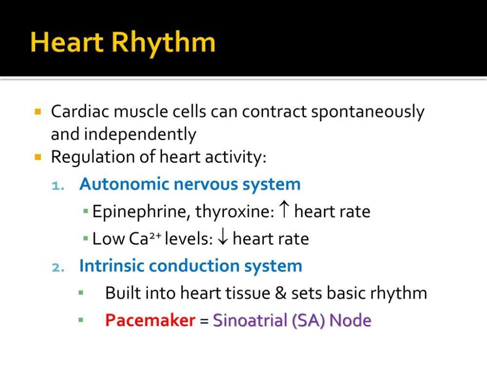 medium resolution of 3 heart