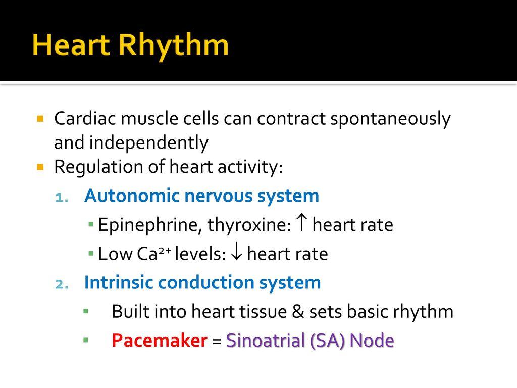 hight resolution of 3 heart