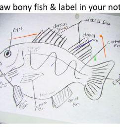 15 draw bony fish label  [ 1024 x 768 Pixel ]