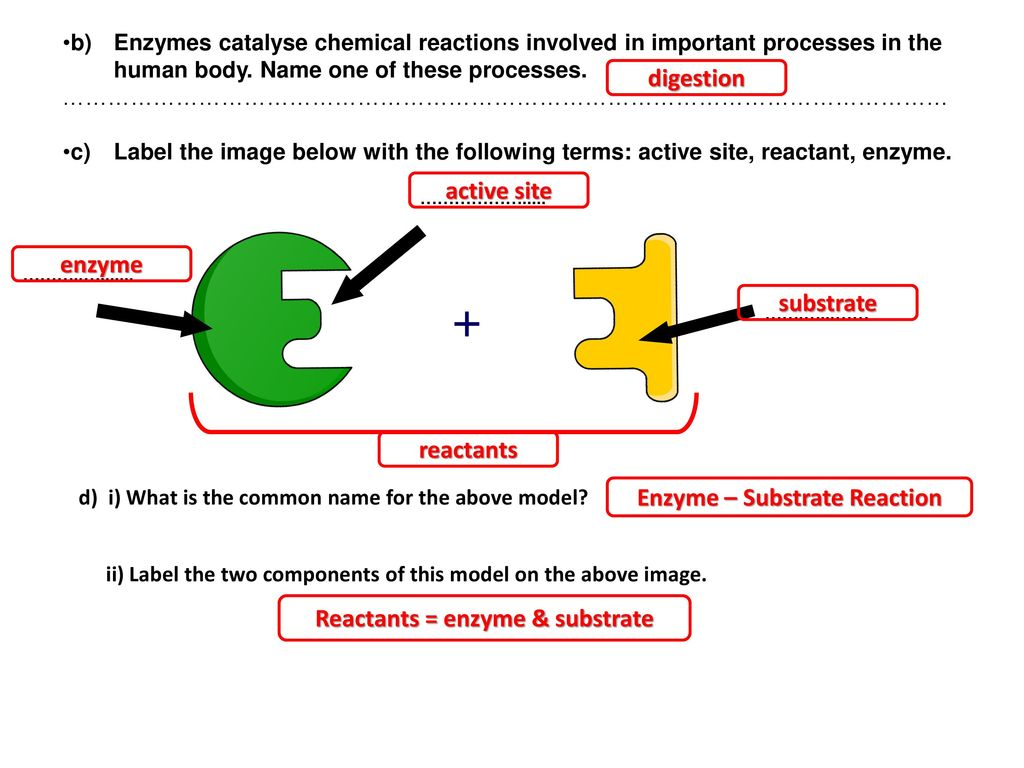 32 Enzyme Label