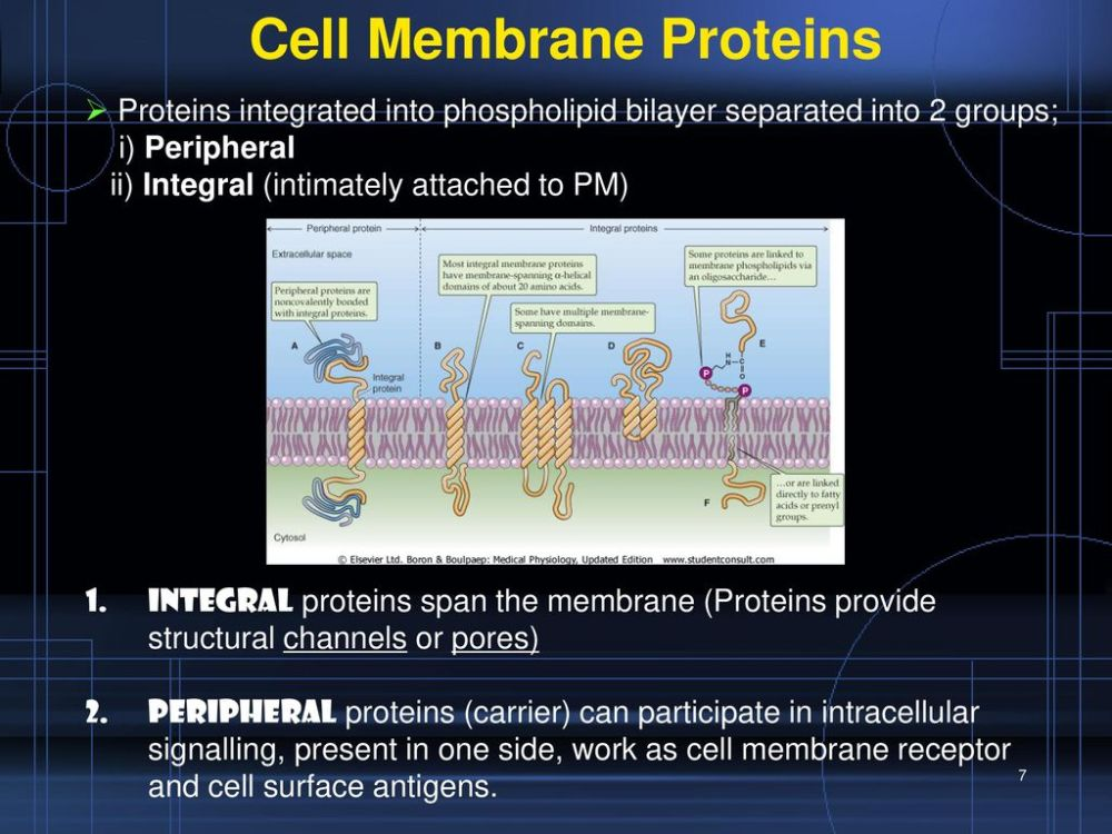 medium resolution of 7 cell membrane proteins