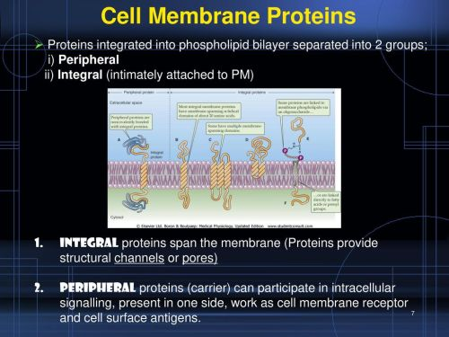 small resolution of 7 cell membrane proteins
