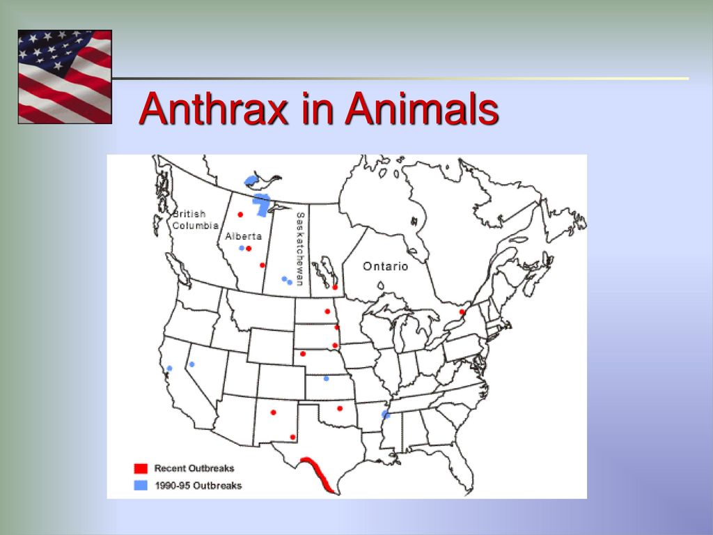 hight resolution of 15 anthrax in animals