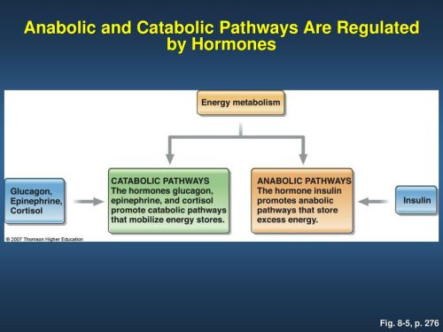 small resolution of anabolic and catabolic pathways are regulated by hormones