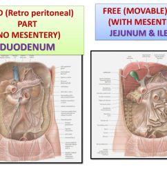 fixed retro peritoneal part [ 1024 x 768 Pixel ]