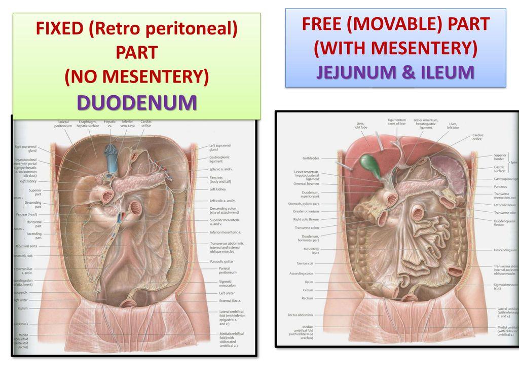 hight resolution of fixed retro peritoneal part